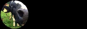Brattens Lantbruk